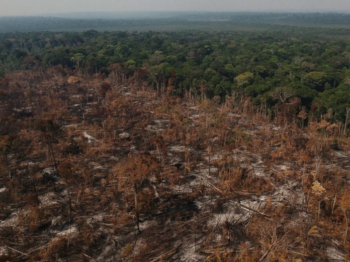 brazil-seeks-billion-dollars-in-foreign-aid-to-curb-amazon's-deforestation