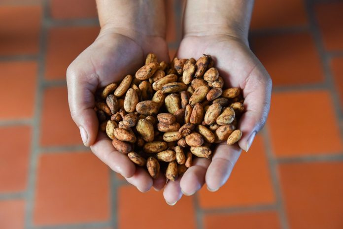 in-brasile-lo-sviluppo-passa-da-cacao-e-foresta:-ecco-come