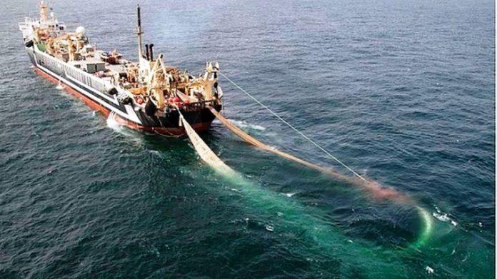 limitazioni-alla-cattura-dei-tonni:-gli-effetti-negativi-sui-pescatori-marchigiani