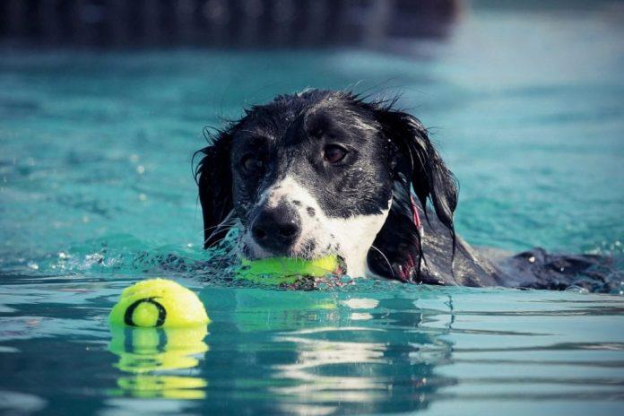 a-comacchio-arriva-dog-sport-experience,-olimpiadi-per-cani-esperti-di-agility,-obedience-e-tartufo