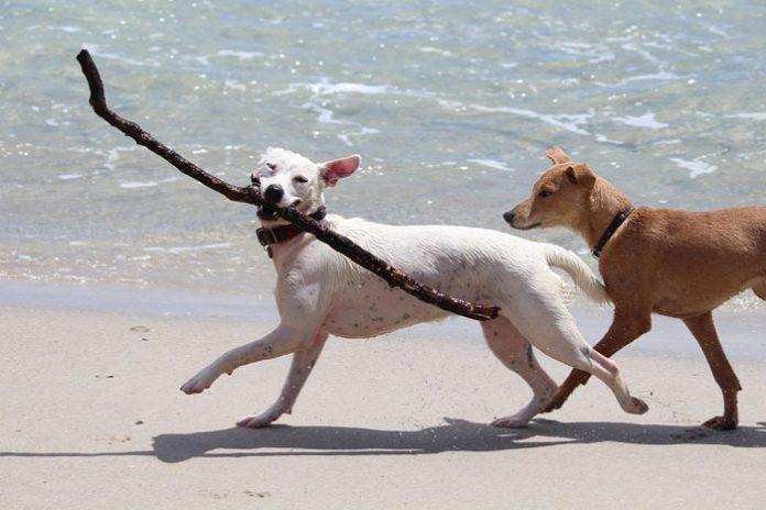 a-trieste-sondaggio-per-dare-nomi-alle-terrazze-sul-mare-ed-una-spiaggia-per-cani