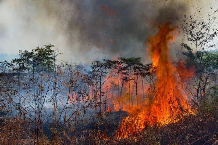 """amazzonia,-graziani-(aics):-""""stop-roghi-con-comunita-e-prevenzione"""""""