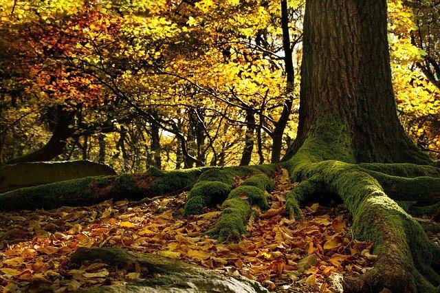 la-foresta-del-cansiglio-fa-bene-all'umanita:-ora-ha-un-certificato-che-lo-attesta